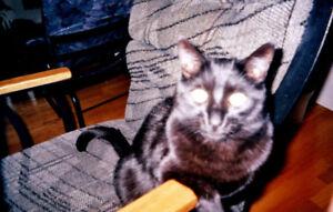 Chat noir perdu