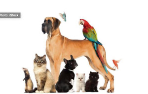 PET SITTER FOR ALL TYPES OF PETS!!!