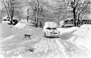 WINTER IS COMING ! SNOW REMOVAL SERVICES
