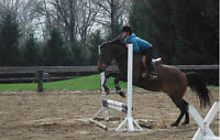 gelding for part-lease