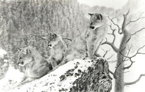 "3 Cougars limited edition print ""Early Morning"" Art by Delvea"