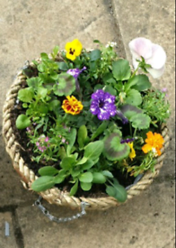 M.C HANGING BASKETS 2 FOR £15