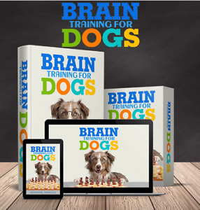 The Best and Most Effective Brain Training For Dogs