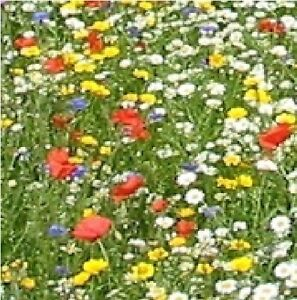 Economy Wild Flower Mix - Cornfield Annual Flower Mixture - 50g Seed - Large