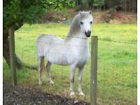 Great natured stallion