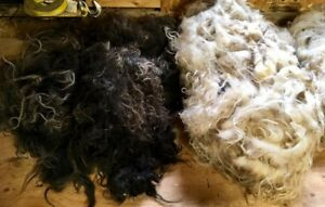 4 Raw Icelandic Fleeces. Half Price.