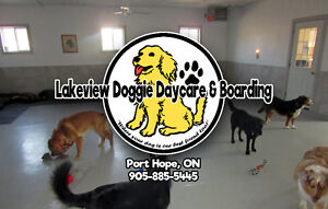Lakview Doggie Daycare & Boarding (Port Hope, ON)