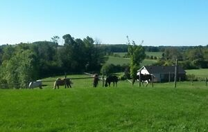 Outdoor Horse Boarding between Port Hope and Cobourg