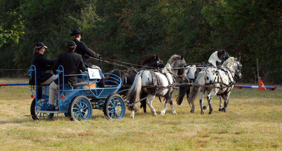Pony Cart Wheel Buying Guide