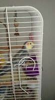 he is a cockatiel His name is max he is 9 years old
