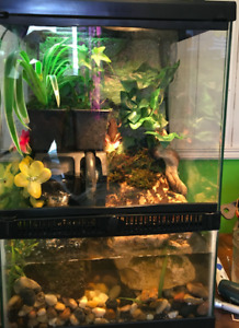 Tree Frog and 2 red clawed crabs and full setup