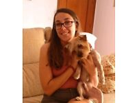 Petsitter / Dogwalker in Southfields