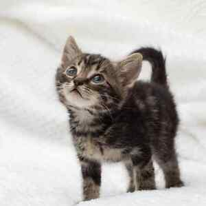 Jill RESCUE kittens available for ADOPTION vet work INC Pinjarra Murray Area Preview