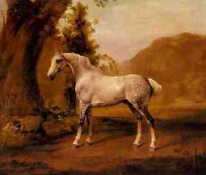 Stubbs George A Grey Stallion In A Landscape A4 Print