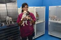 Medicine Hat SPCA - Assistant Kennel Attendant