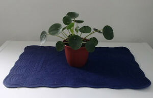 Healthy rooted Pilea