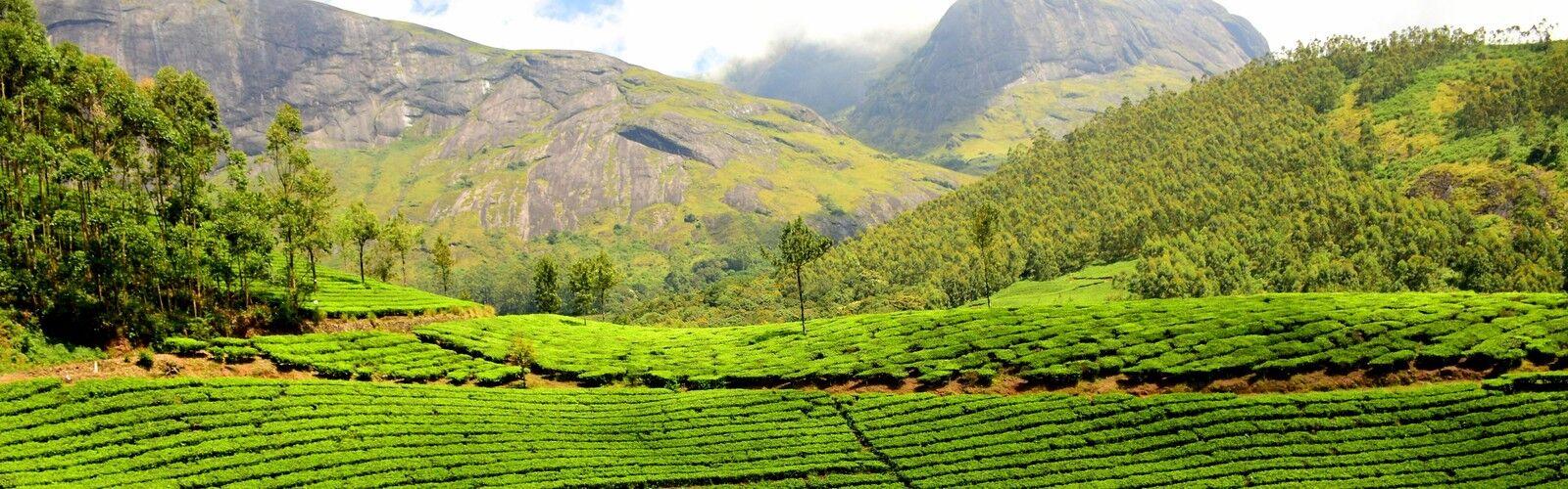Tea Cleanse - Loose Leaf Teas