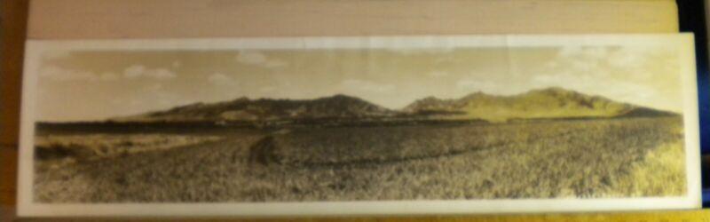 Vintage Panoramic photograph of Pineapple fields, Oahu Hawaii