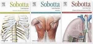 SOBOTTA, LERNKARTEN-Paket, Muskeln - Knochen, Bänder und Gelenke - Organe, ZNS