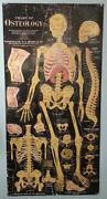 Vintage Anatomy Chart