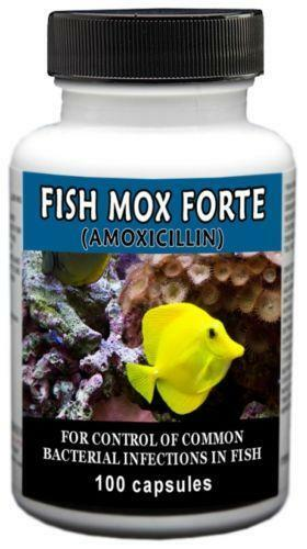 Amoxicillin 500mg fish aquariums ebay for Fish antibiotics doxycycline