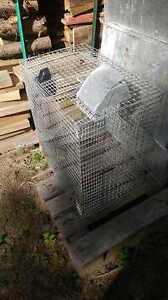 cage reproduction lapin urgent