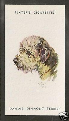 Rare 1940 Peter Biegel Dog Art Head Player Cigarette Card DANDIE DINMONT TERRIER