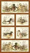 Mallard Duck Fabric