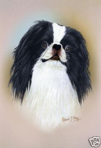 Robert J. May Head Study - Japanese Chin (RMDH090)