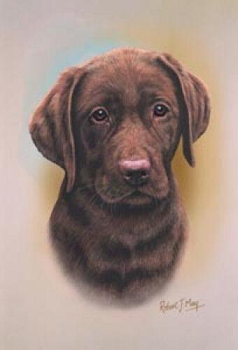 Robert J. May Head Study - Chocolate Labrador Retriever (RMDH095)