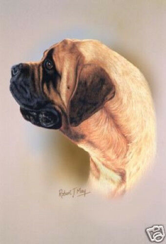 Robert J. May Head Study - Mastiff (RMDH105)