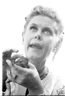 Bewitched Elizabeth Montgomery And Frog Rare Original 1967 Abc Tv Photo Negative