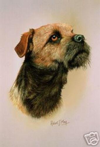 Robert J. May Head Study - Border Terrier (RMDH023)