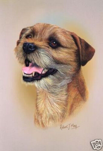 Robert J. May Head Study - Border Terrier (RMDH022)