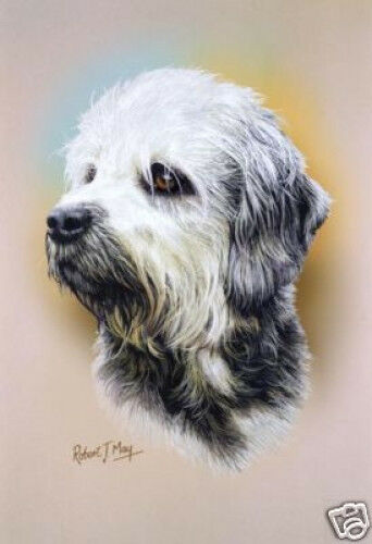 Robert J. May Head Study - Dandie Dinmont Terrier (RMDH063)