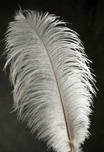 White Ostrich Plumes Feathers Ebay