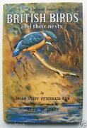 Ladybird British Birds