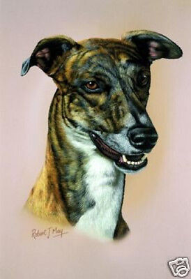 Robert J. May Head Study - Greyhound (RMDH084)
