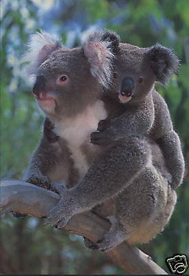 Australien: Grußkarte: Koala mit Baby auf dem Rücken