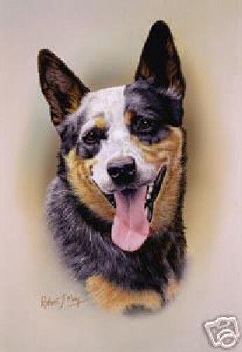 Robert J. May Head Study - Australian Cattle Dog (RMDH006)
