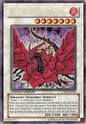 Yugioh Black Rose Dragon