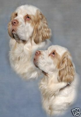 Clumber Spaniel A6 Blank Card Design No 11 By Starprint