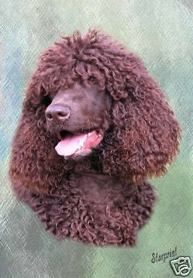 Irish Water Spaniel A6 Blank Card No 3 By Starprint