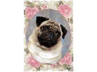 Patterdale Terrier  A6 Blank Card Design No 1 Starprint