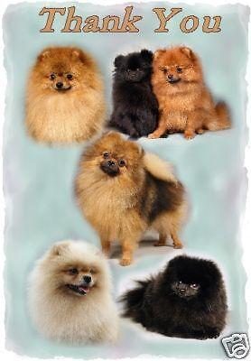 Pomeranian Thank You Card By Starprint