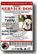 Service Dog Badge