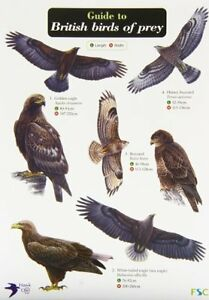 Guide to British Birds of Prey by Simon Norman New Fold-out book or chart Book