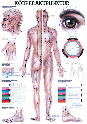 Akupunkturtafel (NEU Lehrtafel, Lehrposter: Körperakupunktur Laminiert)