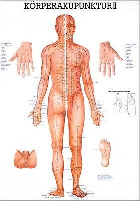 Akupunkturtafel (NEU Lehrtafel, Lehrposter, Poster: Körperakupunktur 2 laminiert)