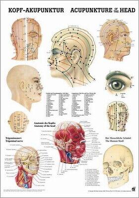 Akupunkturtafel (NEU Lehrtafel: Kopfakupunktur / Akupunktur Laminiert)